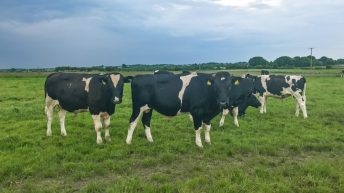 Forage focus: Feeding home-grown crops on rented land in Co. Galway