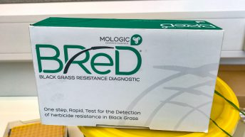 Pregnancy test for blackgrass…how does it work?