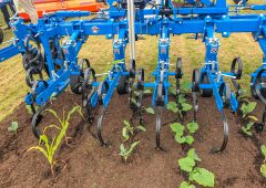 Mechanical weeding: 'We need something else in our toolbox'