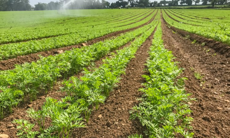 Irish unpaid farm work figures among highest in EU