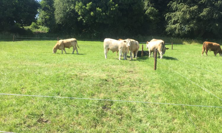Getting the basics right when it comes to grazing infrastructure