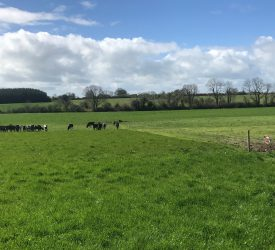 6 steps to maintain grass quality as growth remains strong
