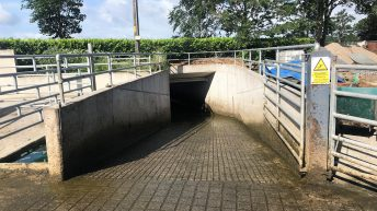 Buildings focus: Cow flow to the fore with footbath and underpass in Co. Westmeath