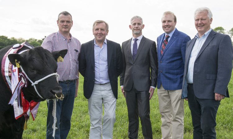Irish Angus championships launch with 'beefy' €23,500 prize fund