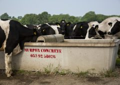 Do you know if your cows are getting enough water?