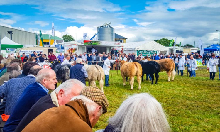 Agricultural shows galore this midsummer weekend