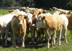 5 reasons why every beef farmer should attend BEEF 2018