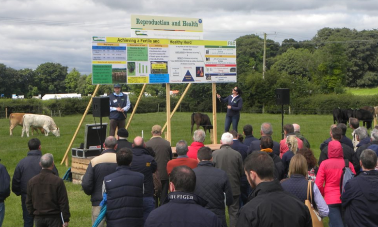 Site map: What's on the agenda at Teagasc's BEEF 2018 event?