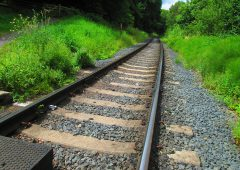 Train strikes livestock near Athlone