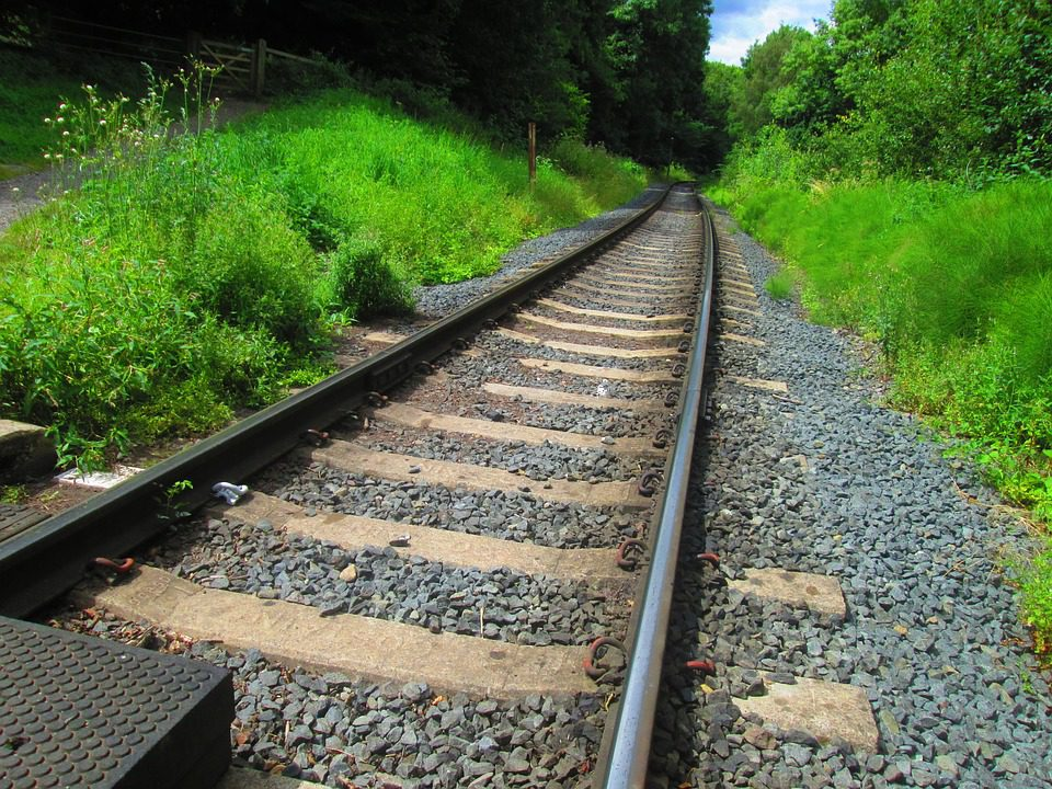 'Notable increase' in train collisions with large animals