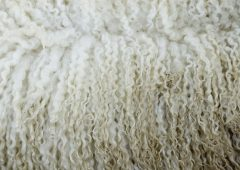 Wool prices expected to remain competitive as demand is 'set to grow'