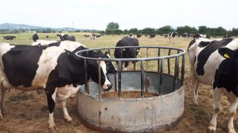Drought hardship: 'Every dairy farmer should cull early'