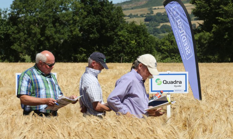 3 spring barley varieties coming from Seedtech
