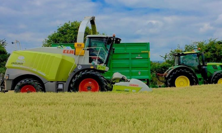 When to cut wholecrop silage?