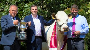Entries open for 35th Diageo Baileys Champion Dairy Cow Competition