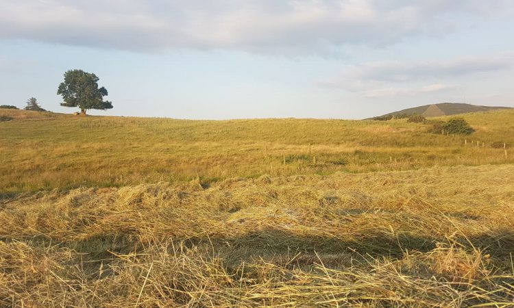 Creed seeks EU help to make 'significant lands' available for fodder conservation