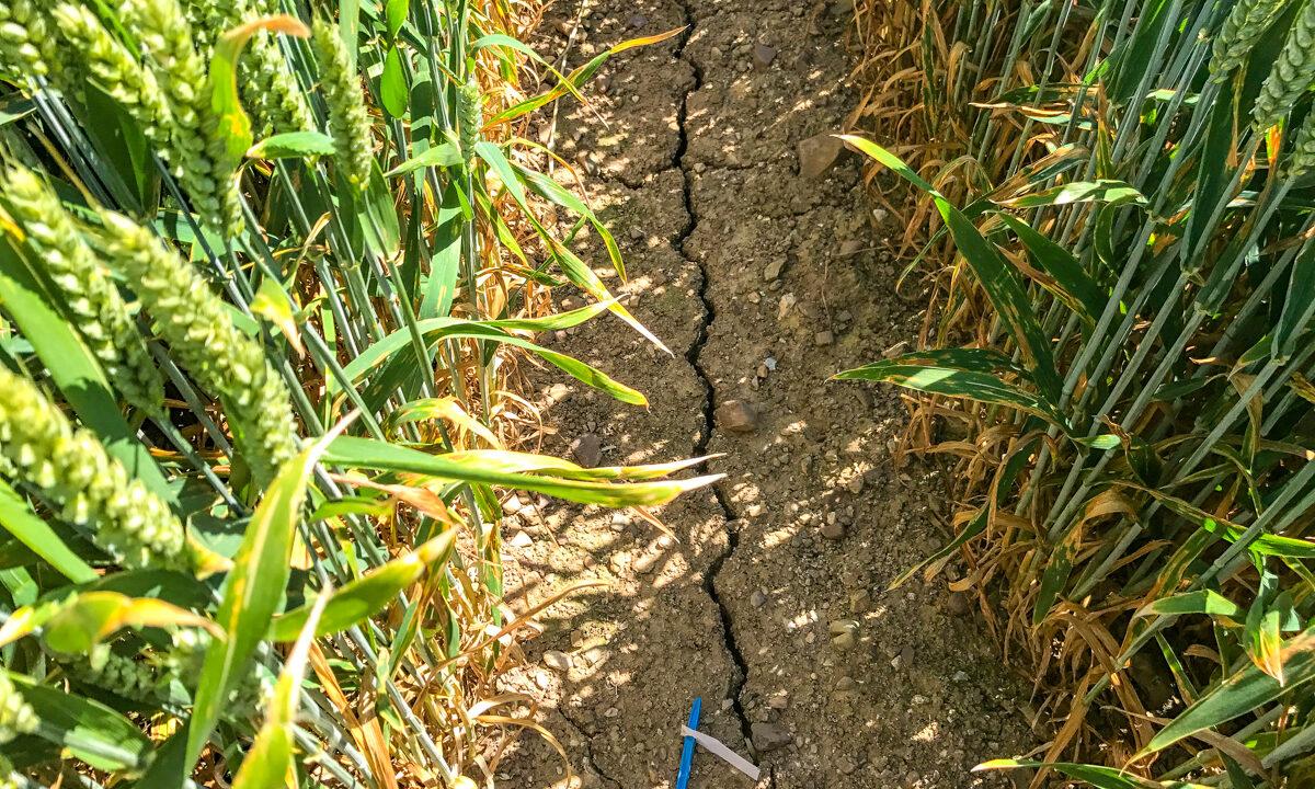 France to seek €1 billion CAP advance as severe drought continues
