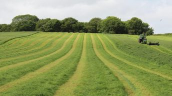 Do I have to graze catch and forage crops or can I bale them?