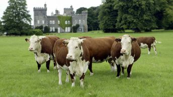 10 finalists picked for Irish Hereford Travel Bursary Competition