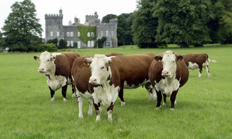 Irish Hereford Breed Society elects new president