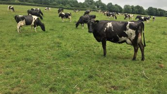 Dairy focus: Silage and meal in, as drought takes hold in Co. Laois