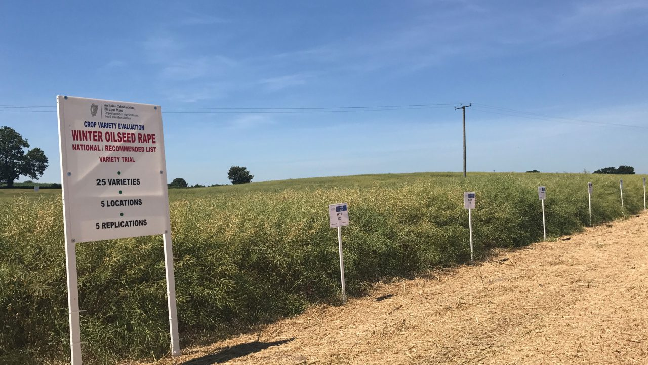 Oilseed rape recommended list published