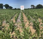 Meeting the nutritional needs of a growing maize crop