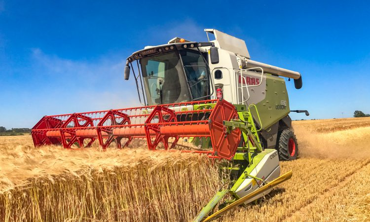 Video: Hybrid barley proves its worth to growers