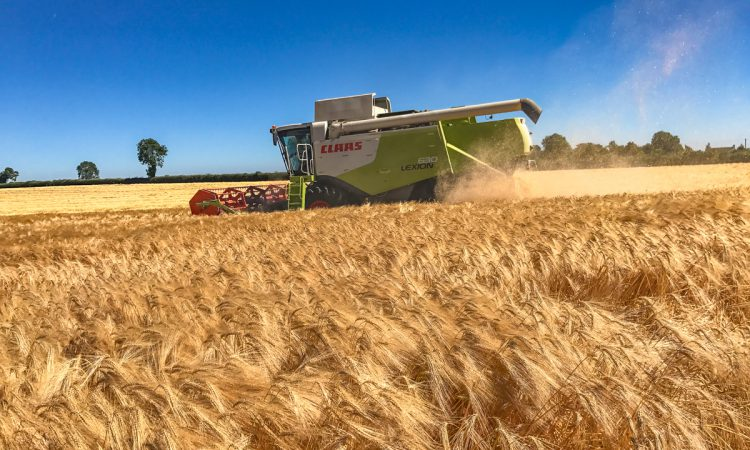 'Next harvest could be a different story than this year on prices'