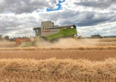 Glanbia announces 2020 grain prices