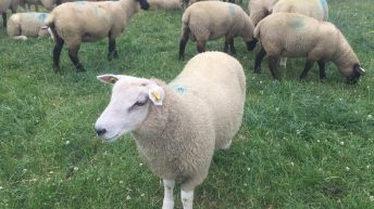 Dealing with drought takes centre stage at SHEEP 2018