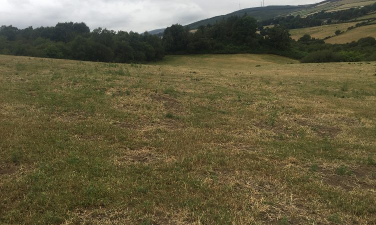 How long before grass growth rates return to normal levels?