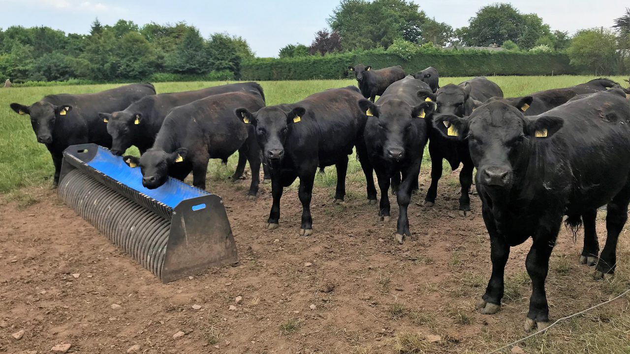 Beef focus: 'No matter how good a cow is, she's a bad cow if she fails to go in calf'
