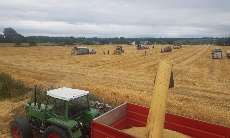 Video: Mayo straw bales sold before they hit the ground
