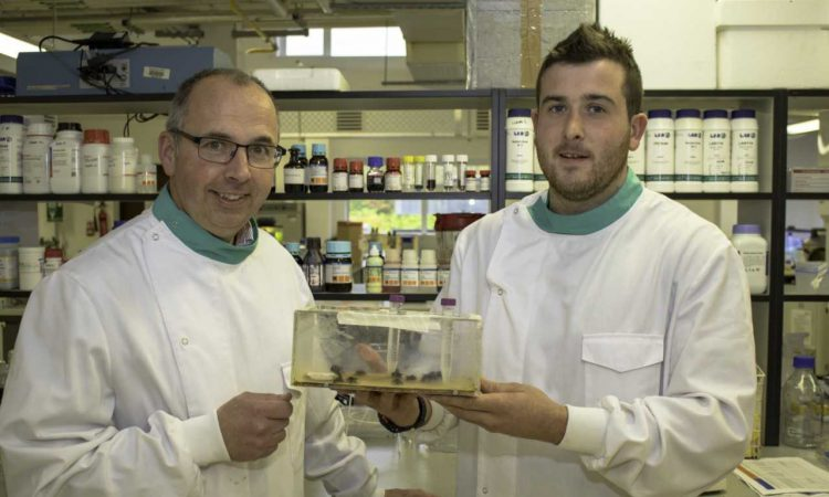 'Severe decline in bee species threatens food security worldwide'