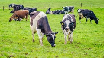 Sustainable Dairy Assurance: County-by-county breakdown