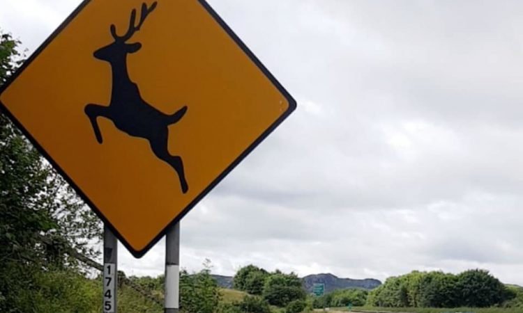 Wicklow deer project 'an acknowledgement' of issue