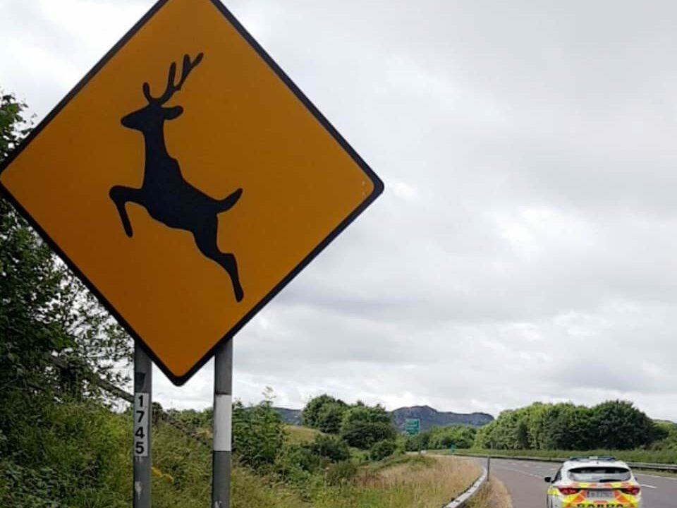 Extra vigilance urged on rural roads as deer rutting season to begin