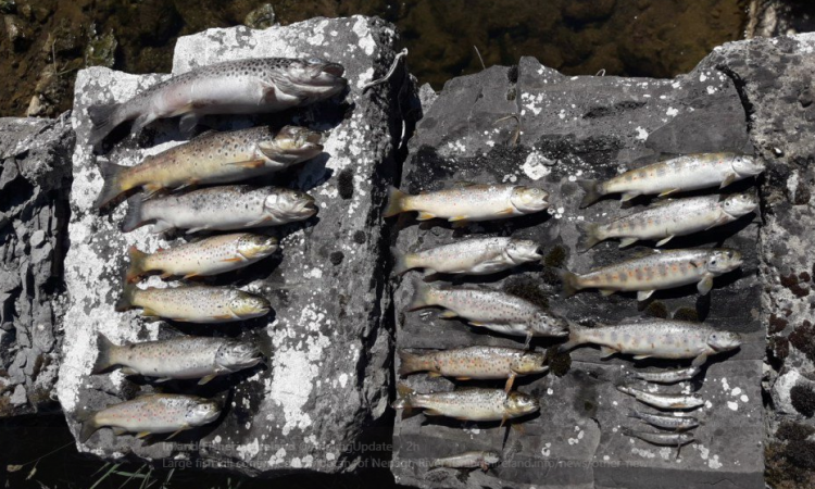 Nearly 15,000 fish killed in Tipperary river