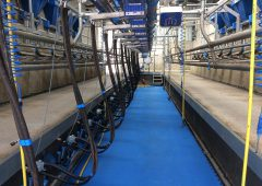 Aurivo drops milk price for November