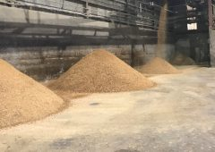 Feed supply issues coming down the line