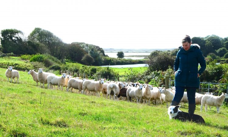 'My work is a journey into the land of shepherding'