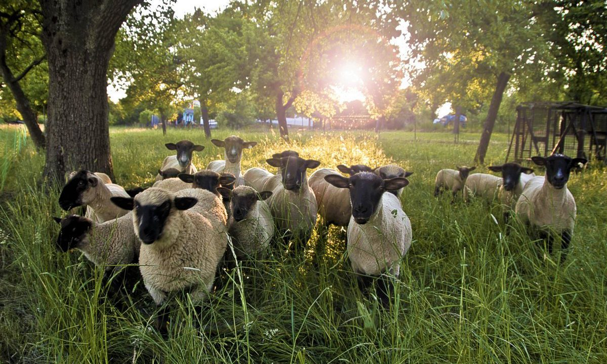 Gates open for SHEEP 2018 at Teagasc campus in Athenry