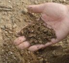 Soil moisture deficits set to improve slightly
