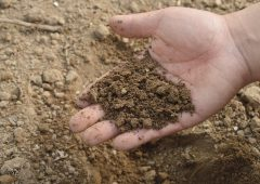 Do you know what's in a handful of soil?