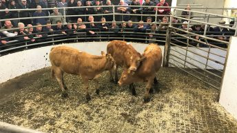 Cattle marts: Drought takes its toll on the market