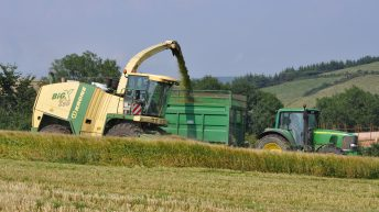 Putting a value on standing cereal crops for wholecrop silage