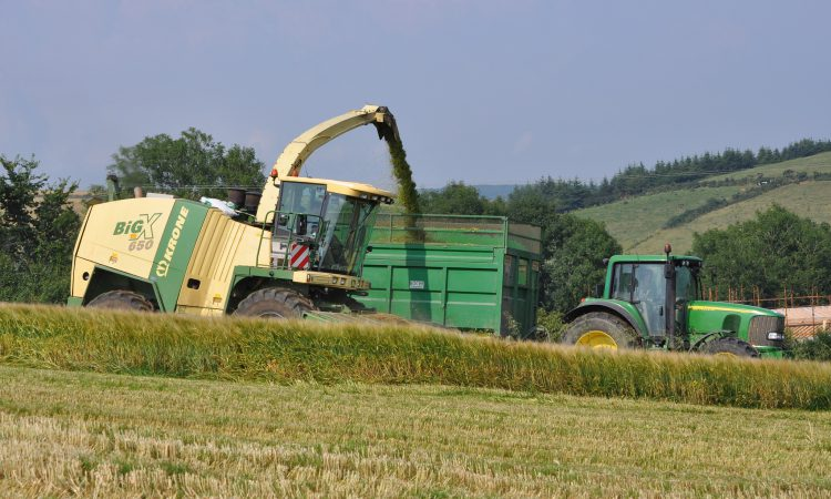 When to get cracking when making wholecrop silage