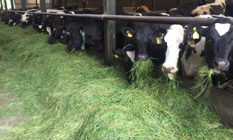 Fodder shortage: Teagasc receiving phone calls 'morning, noon and night'