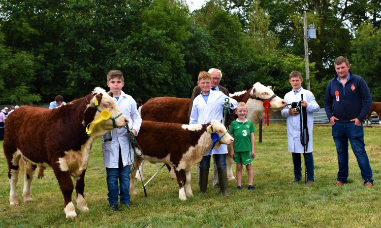 Pics: Over 60 Herefords on display at the North Tipperary Agricultural Show